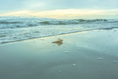 Seashell on the beach at twilight time Royalty Free Stock Photo