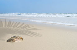 Seashell on Beach Under Palm Royalty Free Stock Images