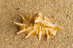 Seashell on beach Royalty Free Stock Photos