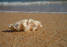 seashell on beach with waves Royalty Free Stock Photo