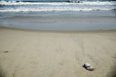 Seashell on a beach with waves in the background. Seashell on a beach with waves crashing and sand. Taken on Ocracoke Island, NC, taken in the summer stock image