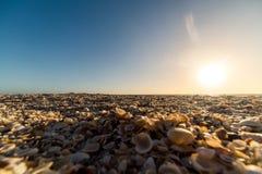 Seashell beach Royalty Free Stock Photos