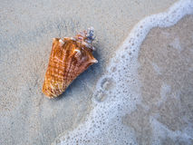 Seashell on a beach. Seashell on a white beach with water wave Stock Photo