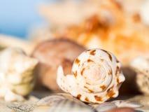 Seashell on a beach on Zanzibar Stock Image
