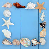 Seashell Beauties Royalty Free Stock Image