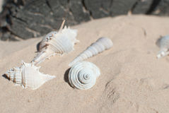 Seashell. Beautiful seashell on the seaside Royalty Free Stock Photography