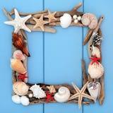 Seashell Beauty Stock Photography