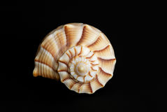Seashell on black. Seashell on a black background Royalty Free Stock Photography