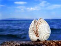Seashell blanc Photos libres de droits