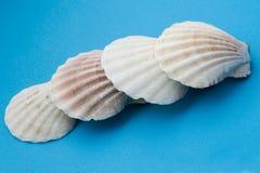 Seashell blanc sur la fin de bleu vers le haut photos stock