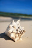 Seashell blanc sur la plage images stock