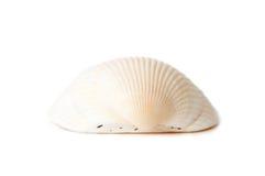 Seashell blanco fotos de archivo