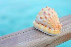 Seashell bleu d'océan photographie stock