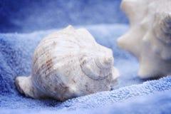 Seashell on blue towel. Closeup macro Royalty Free Stock Photo