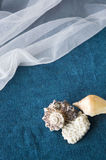 Seashell on blue and white fabric Stock Photos