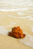 Seashell with blurred background Stock Photo