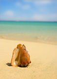 Seashell with blurred background Stock Image