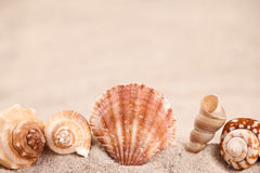 Seashell border Stock Photography