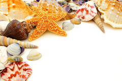 Seashell border Royalty Free Stock Photo