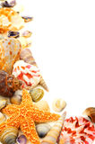 Seashell border Royalty Free Stock Images