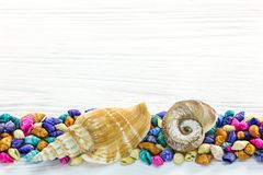 Seashell border on white rustic wooden background . Seashell border design on white rustic wooden background Stock Photos