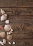 Seashell border. On a wooden background Stock Photo
