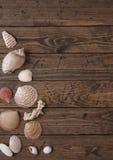 Seashell border Stock Photo