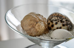 Seashell bowl. Three seashells in a bowl Royalty Free Stock Photo