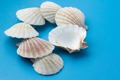 Seashell branco no azul imagem de stock