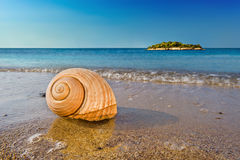 Seashell on calm Mediterranean beach Royalty Free Stock Photography