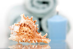 Seashell and candle Stock Image