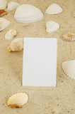 Seashell and card on sand Stock Image