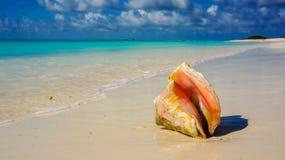 Seashell in a caribbean beach. Closeup of a seashell in a caribbean beach royalty free stock photos