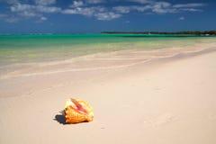Seashell on caribbean sea Stock Photo