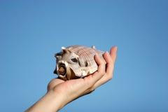 Seashell chez la main de la femme photographie stock libre de droits