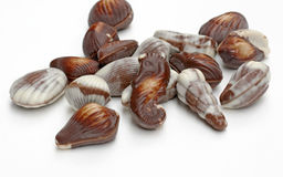 Seashell Chocolates Stock Image