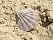 Seashell Clam на песке Стоковые Изображения RF