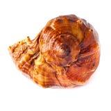 Seashell claveteado grande en blanco. Fotos de archivo