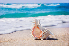 Seashell on the clean sandy beach. Seashell background on the clean sandy beach against waves stock images