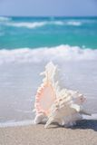 Seashell on clean sandy beach against the blue sea background Royalty Free Stock Photos
