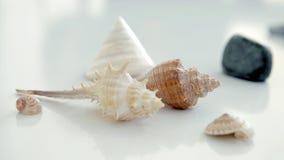 Seashell close up Royalty Free Stock Photos
