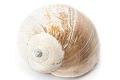 Seashell. Close-up. Stock Photo
