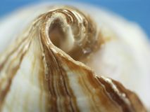 Seashell closeup Royalty Free Stock Image