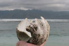 Seashell, Cockle, Clam, Conch stock photo