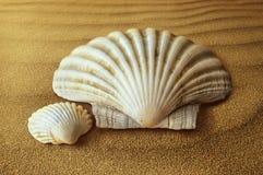 Seashell, Cockle, Conch, Nautilida royalty free stock photos
