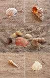 Seashell. Collage Lizenzfreie Stockbilder