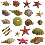 Seashell collage big pack Stock Photo
