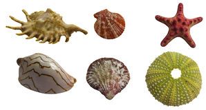 Seashell collage pack Stock Photo