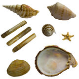Seashell collage pack Stock Photography