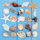 Seashell Collage Stock Images